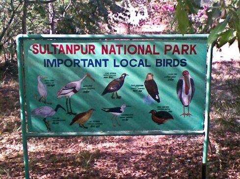 Sultanpur Lake in Delhi