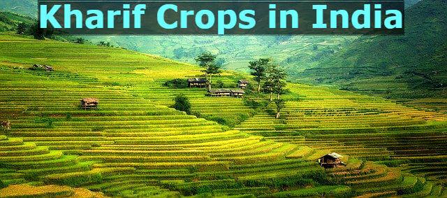 Kharif Crops in India