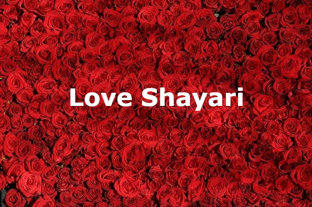 Love Shayari in Hindi popular in India